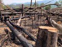 Đăk Lăk điều tra 2 vụ phá rừng rất nghiêm trọng