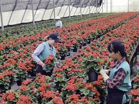 Lam Dong develops modern agriculture