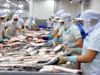 Sustainably developing the fisheries sector