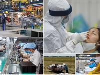 Hai kịch bản cho kinh tế Việt Nam