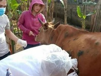 Strengthening prevention and control of animal diseases