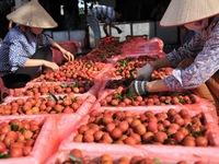 Tạo cơ chế hợp tác giữa các bên thúc đẩy tiêu thụ nông sản