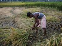 Xuất khẩu nông sản Ấn Độ đạt mức cao nhất năm 6 năm
