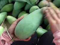 Vietnam exports 25 tonnes of green mangos to Australia