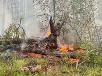 Siberia đối mặt với cháy rừng sau tháng 6 khô nóng  nhất trong 133 năm qua