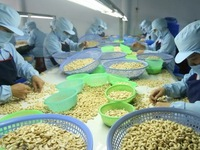 More Japanese consumers prefer Vietnamese cashew nuts