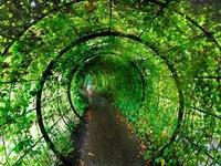 Kỳ lạ vườn độc dược ở Anh
