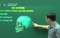 Trường học mở môn Sinh học: Bộ xương và các thành phần của bộ xương