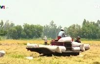 DN ngoại hướng tới đầu tư sản xuất lúa gạo tại Việt Nam