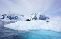 """Thế giới đang cạnh tranh thầm lặng ở """"miếng bánh ngon"""" Bắc Cực"""