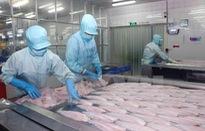 Mỹ áp thuế chống phá giá cá tra Việt Nam: Hoạt động xuất khẩu vẫn bình thường