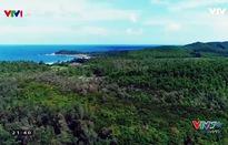 VTVTrip: Băng qua khu rừng trâm linh thiêng ở đảo Quan Lạn
