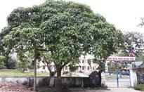 Loại bỏ cây, hoa gây ngộ độc trong trường học