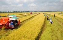 Tích tụ ruộng đất: Doanh nghiệp và người dân chưa tìm được tiếng nói chung