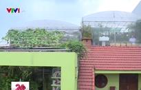 Việc tử tế: Nhân rộng mô hình đô thị xanh tại Hải Phòng
