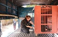 Cứu hộ thành công sáu cá thể gấu ngựa tại tỉnh Đắk Lắk