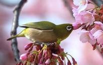 Những bức ảnh đẹp về thiên nhiên Nhật Bản