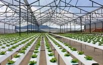 100.000 tỷ đồng hỗ trợ nông nghiệp công nghệ cao: Có dễ tiếp cận?