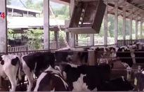 Ngành chăn nuôi Việt Nam đóng góp tích cực vào mục tiêu phát triển bền vững