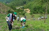 Cần làm gì để phát triển lâm nghiệp bền vững?