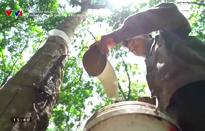 Doanh nhân và Hội nhập: Hiệu quả từ đầu tư nông nghiệp ở Lào