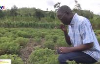 Sản xuất tinh dầu - Hướng đi mới cho châu Phi