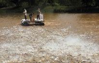 Đồng Tháp đầu tư 146 tỷ đồng sản xuất giống cá tra chất lượng cao