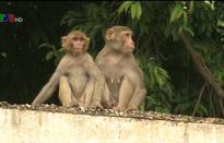 Nhân viên văn phòng Chính phủ Ấn Độ được khuyến cáo về mối đe dọa từ khỉ