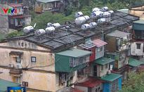 Hà Nội giao cho 19 chủ đầu tư cải tạo chung cư cũ: Tại sao vẫn bế tắc?