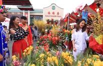 Tết Việt với thế hệ người Việt thứ 2 ở Mỹ
