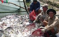 Mỹ áp thuế chống bán phá giá cá tra cao nhất lịch sử