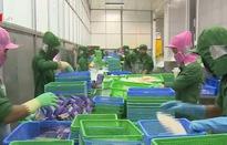 VASEP: Mỹ áp thuế chống bán phá giá cá tra từ Việt Nam không công bằng, vô lý