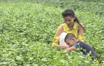 Chuyến đi màu xanh: Khả năng chữa bệnh tuyệt vời của rau mồng tơi không phải ai cũng biết