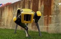 SpotMini - Chó robot thế hệ mới
