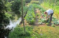 Pháp đứng thứ 3 châu Âu về phát triển nông nghiệp hữu cơ