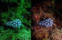 Sắc xanh dưới lòng đại dương – khắc tinh trong nhiếp ảnh