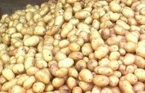 60% khoai tây chế biến tại Việt Nam phải nhập khẩu