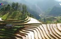 Ruộng bậc thang giúp bà con dân tộc H'Mông thoát nghèo
