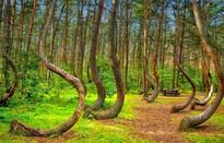 Bí ẩn khu rừng có hàng trăm gốc cây bị uốn cong một cách khó hiểu