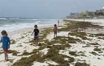 """Nhiều bãi biển ở Mexico bị """"nhuộm xanh"""" vì tảo biển"""