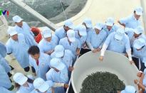 Thu hoạch vụ tôm công nghệ cao đầu tiên tại Bình Định
