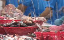 Xuất khẩu cá tra sang thị trường EU có dấu hiệu phục hồi