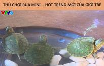 Nở rộ trào lưu mua bán rùa tai đỏ trên mạng xã hội