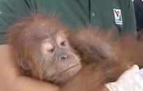 Malaysia ngăn chặn vụ buôn lậu hơn 400 động vật quý hiếm