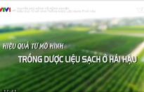 Chuyện nhà nông với nông nghiệp: Hiệu quả từ mô hình trồng dược liệu sạch ở Hải Hậu