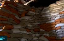 Bất cập quản lý thị trường lúa giống