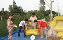 Chung tay hỗ trợ nông dân tiêu thụ lúa Đông Xuân
