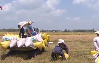Nhiều hợp đồng xuất khẩu gạo được ký kết
