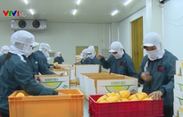Việt Nam đề nghị Trung Quốc tạo thuận lợi nhập khẩu nông sản