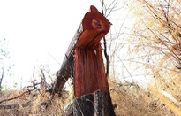 Hàng chục ha rừng bị lấn chiếm, sang nhượng trái phép
